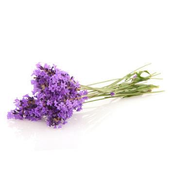 Lavender – Must Have Essential Oil #1